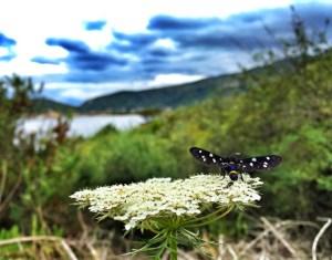 Via dei Rosmarini - B&W butterfly
