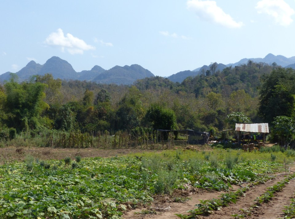 Vegetable patch with mountains beyond