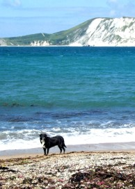 Black and white dog on a beach