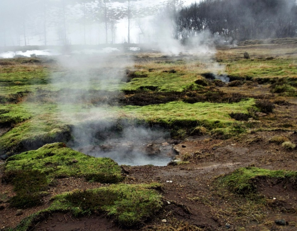 Steaming green landscape