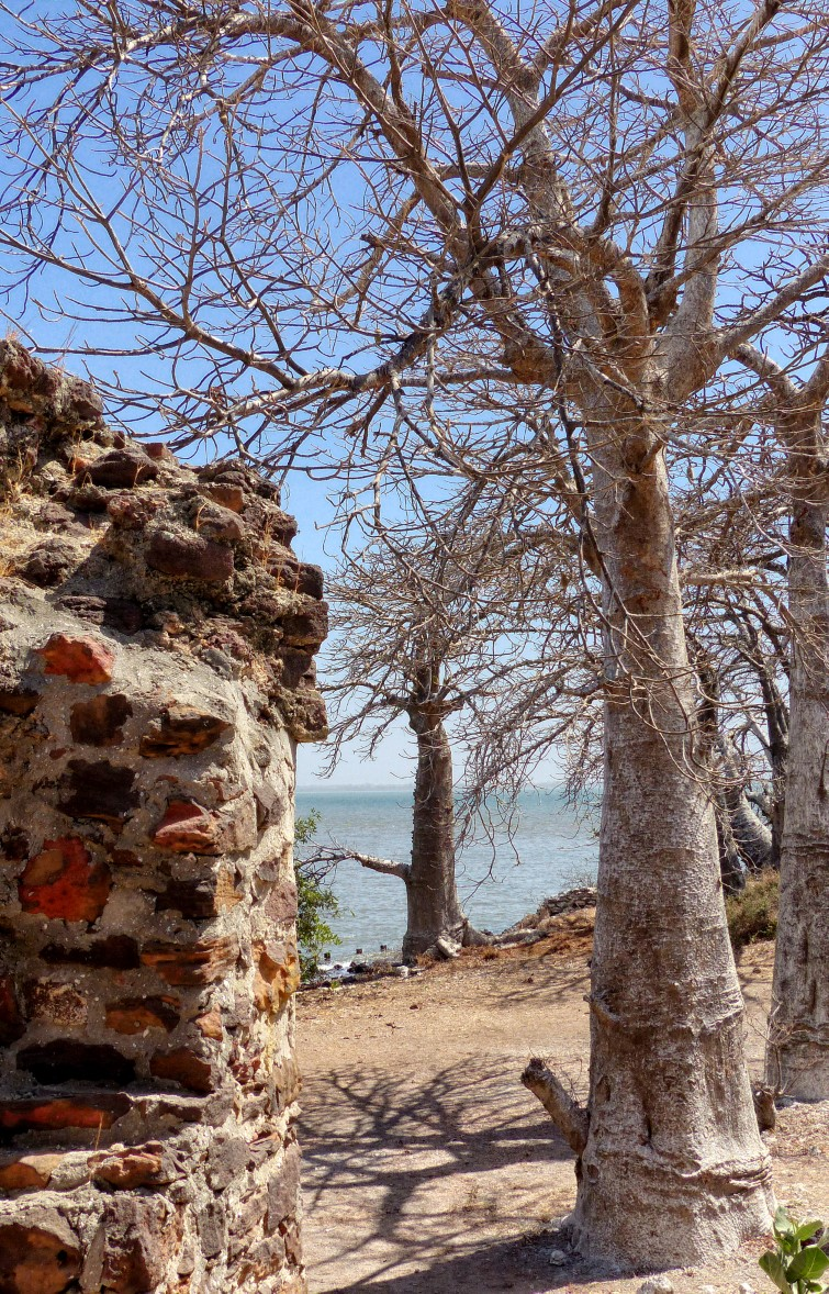 Ruined wall and baobab trees