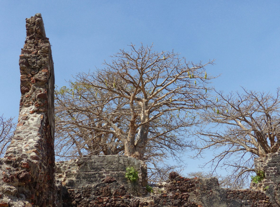 Ruined walls and trees