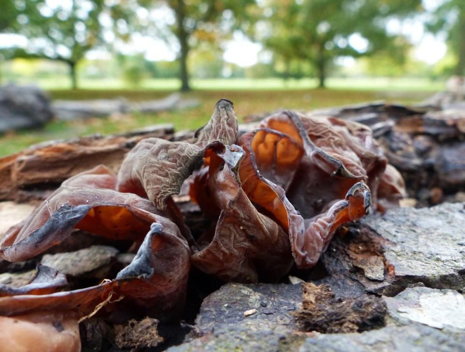 Fungi on a fallen log