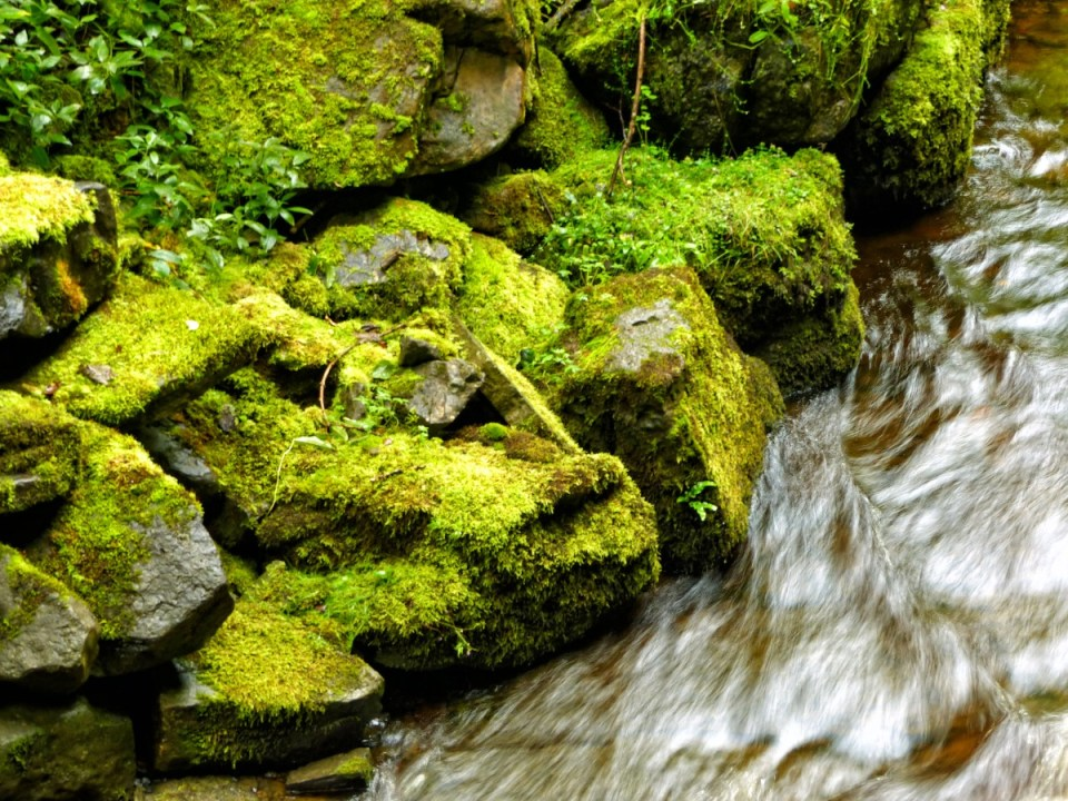 Lichen-covered rocks and fast water