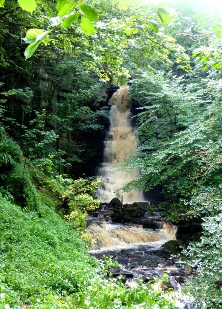 Single drop waterfall in a wood
