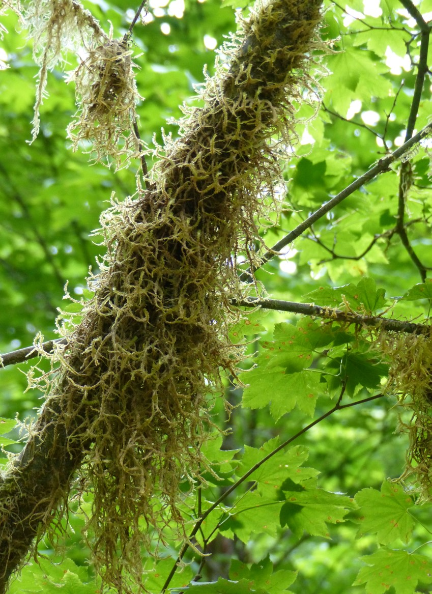 Moss clinging to a branch