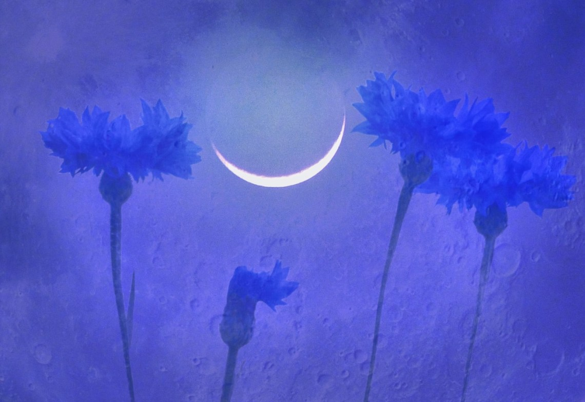 Manipulated photo of cornflowers and moon