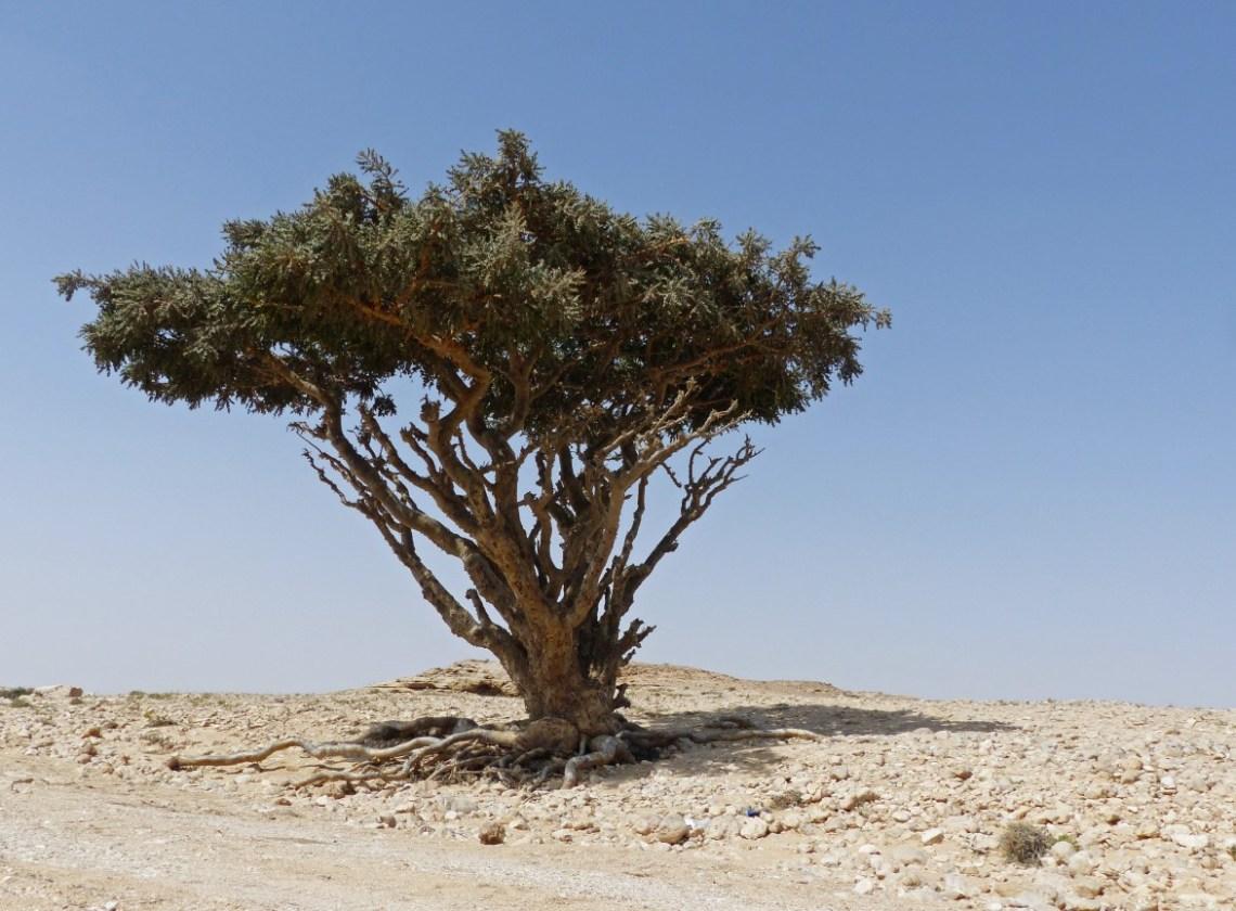 Scrubby tree in barren landscape