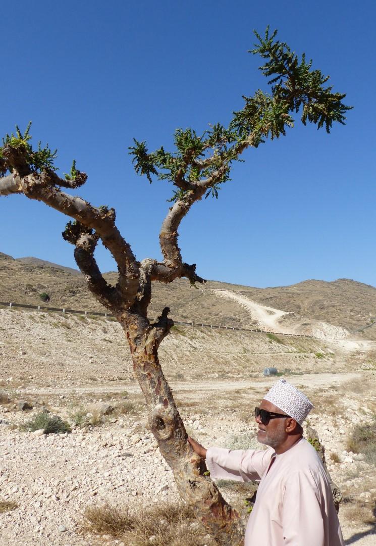 Man standing by tree in barren landscape