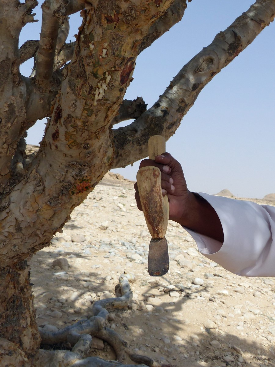 Man holding a scraping tool by a tree