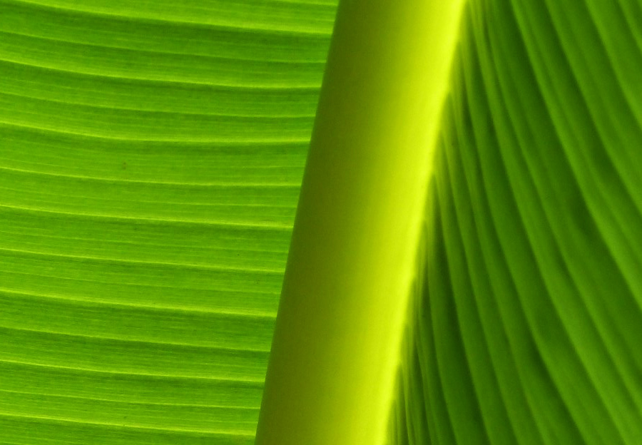 Close up of a green leaf