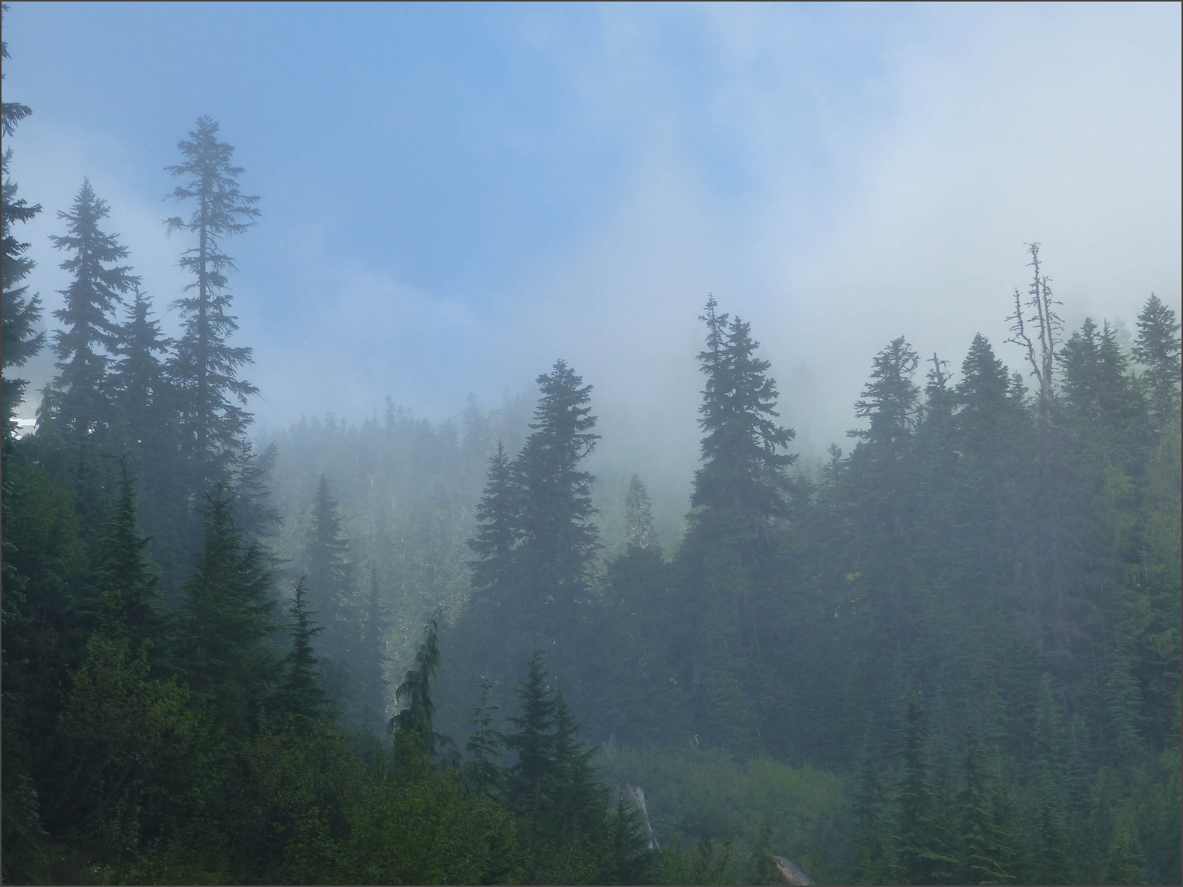 Conifers and misty blue sky