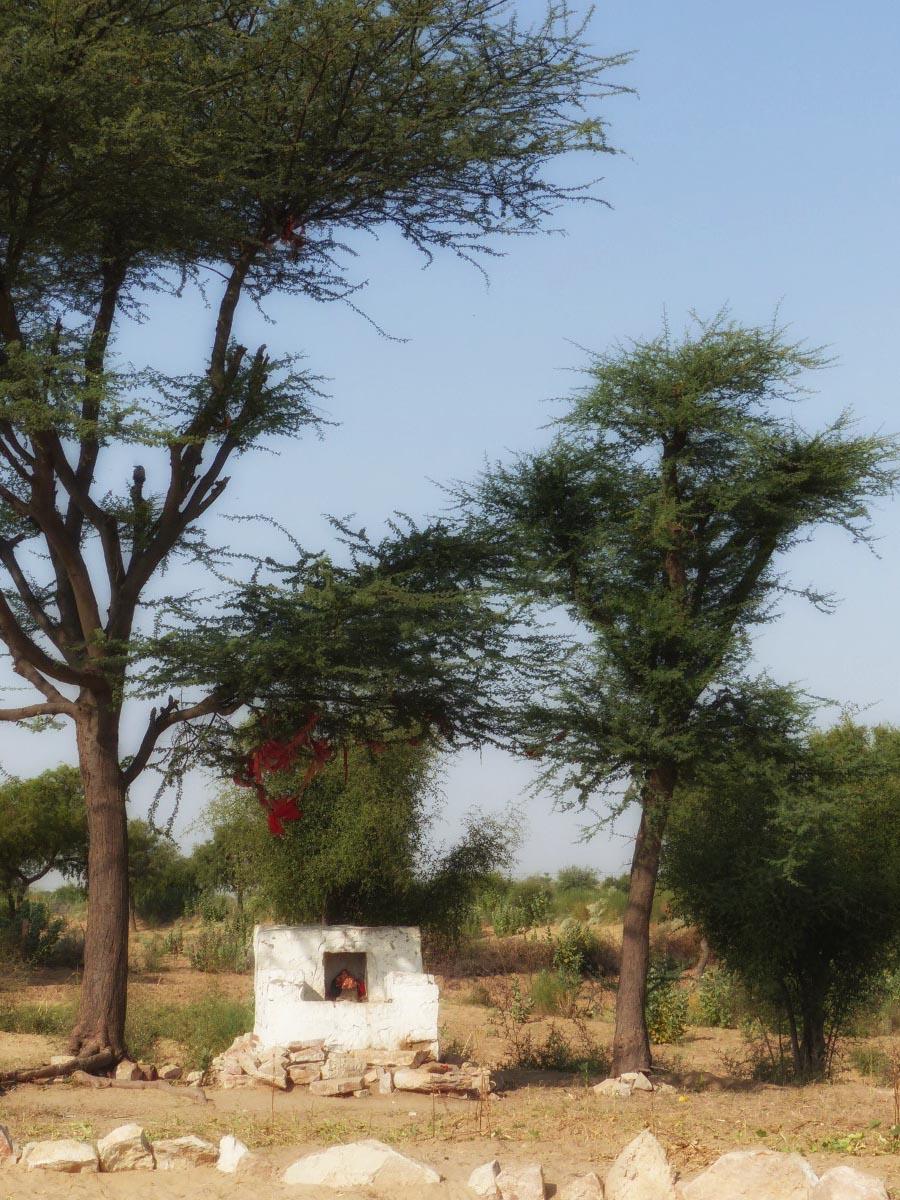 Small shrine beneath some trees