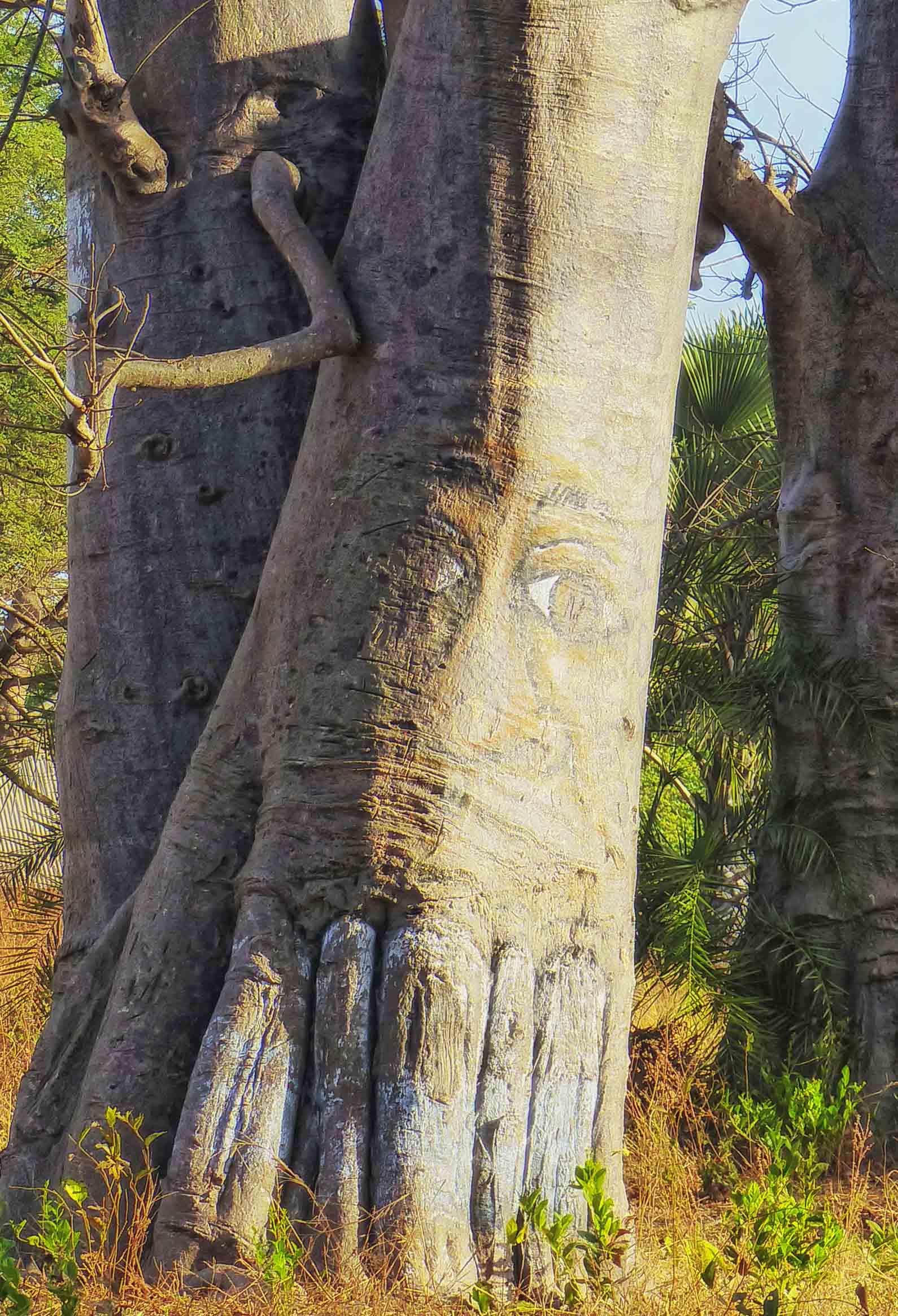 Eyes painted on tree trunk