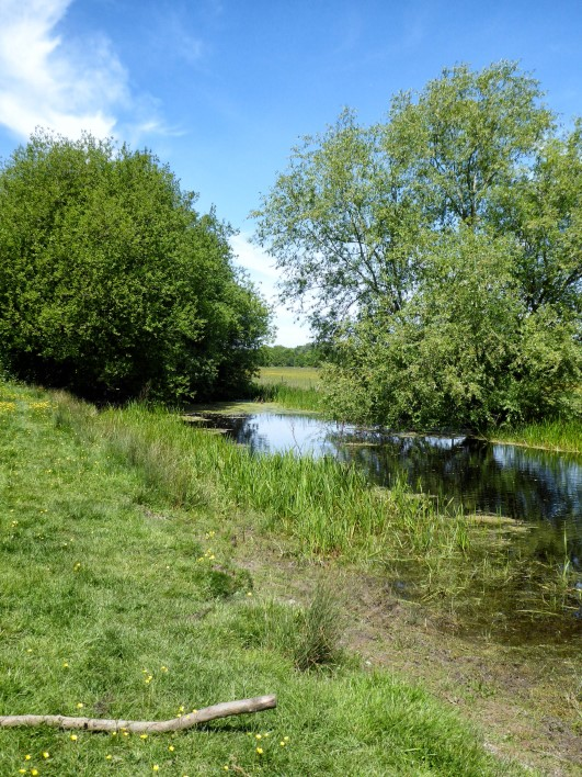 Pond in green meadow