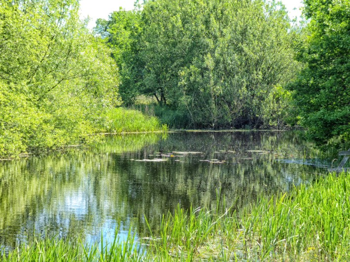 Pond surrounded by green trees