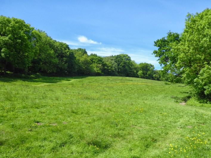 Green meadow, trees, blue sky