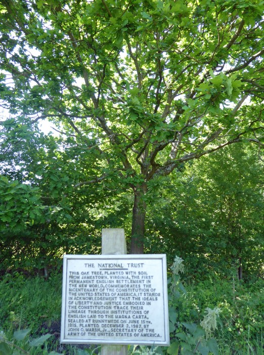 Oak tree with sign in front