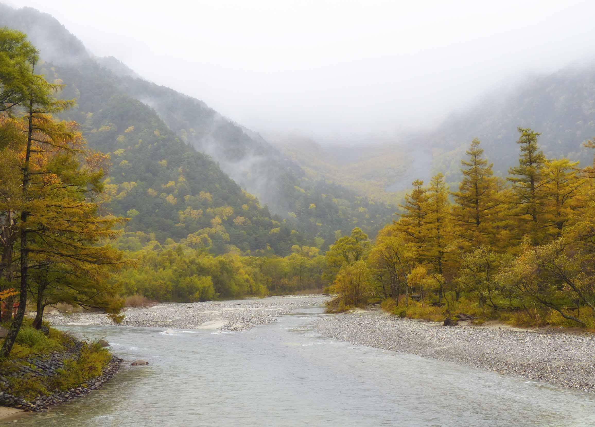 River bordered by yellow conifers and wooded hillsides