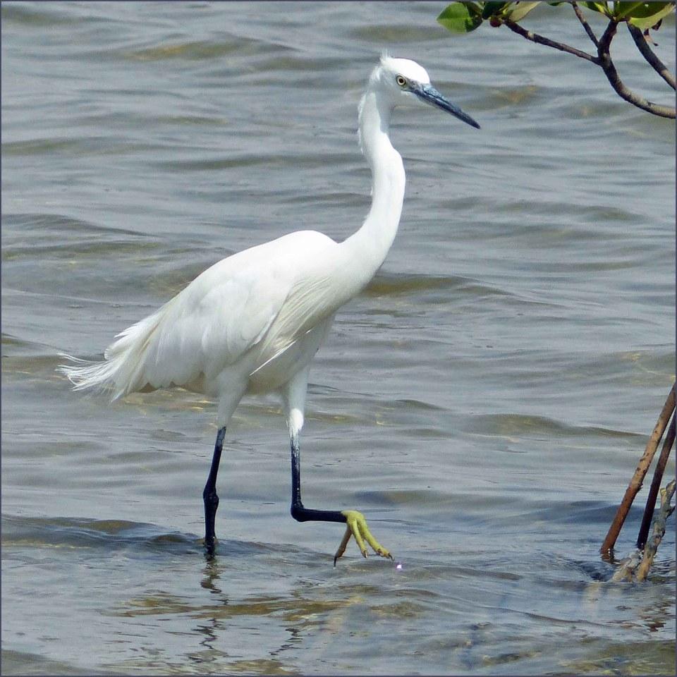 Large white bird with yellow feet