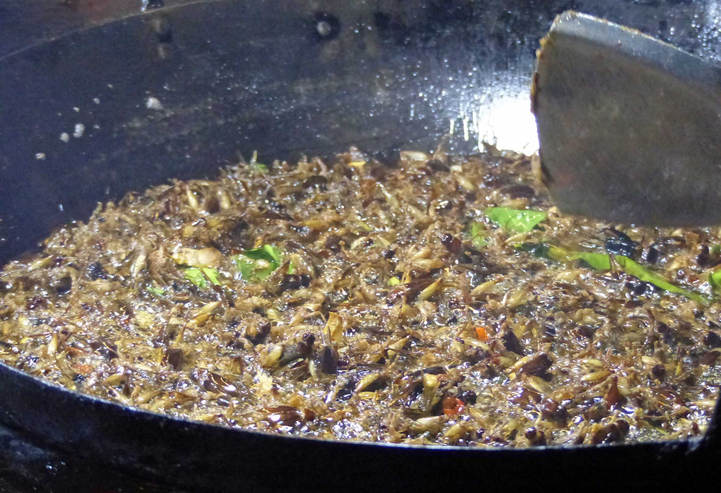 Large pan with insects frying
