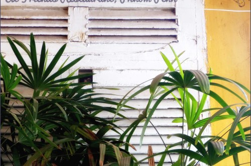 White window shutter and green leaves