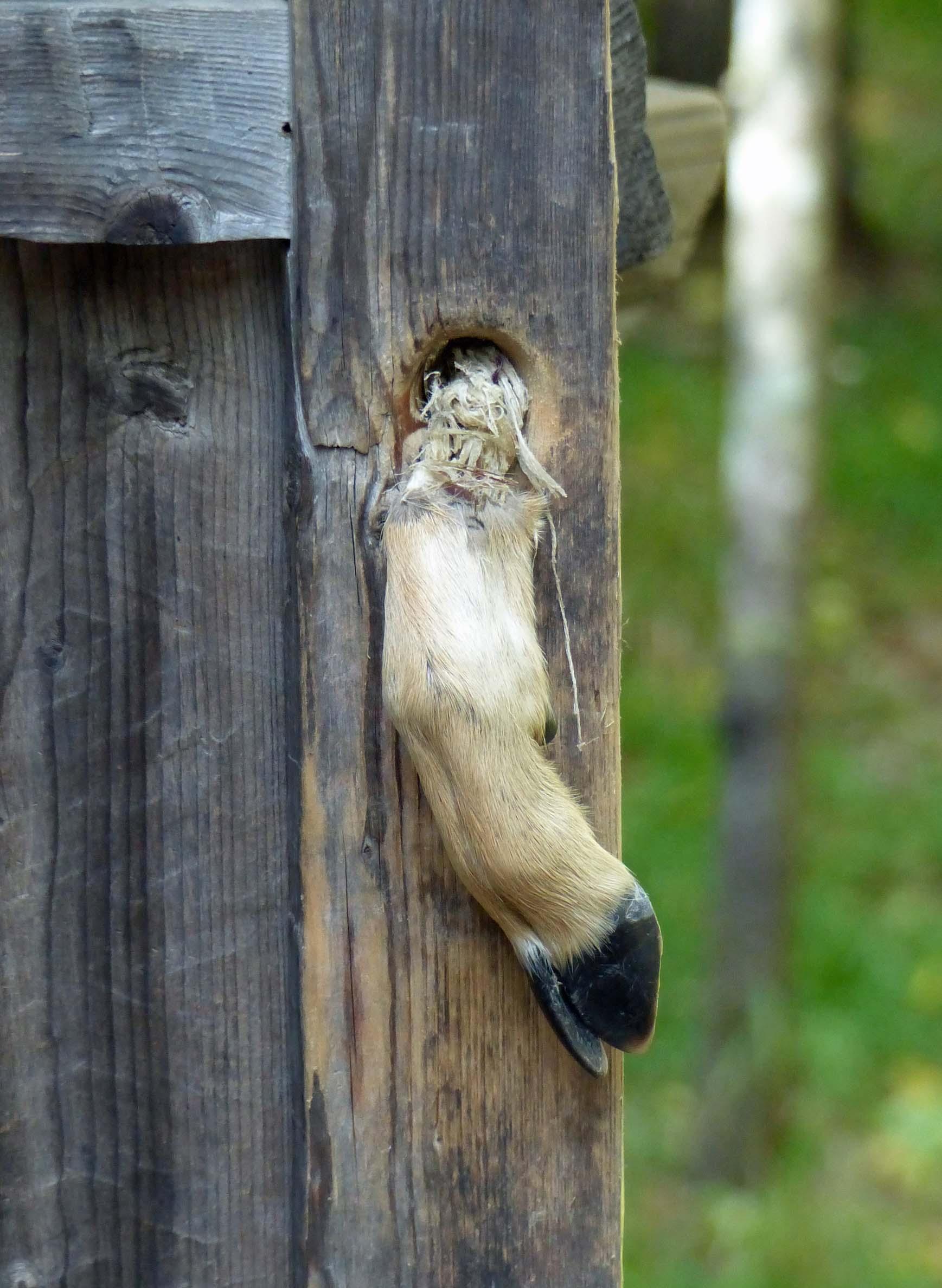 Door handle made from deer's foot