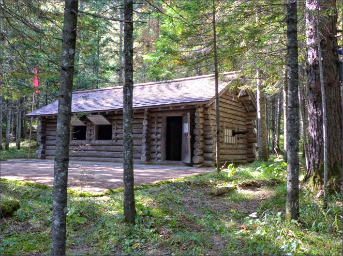 Log cabin among tall trees