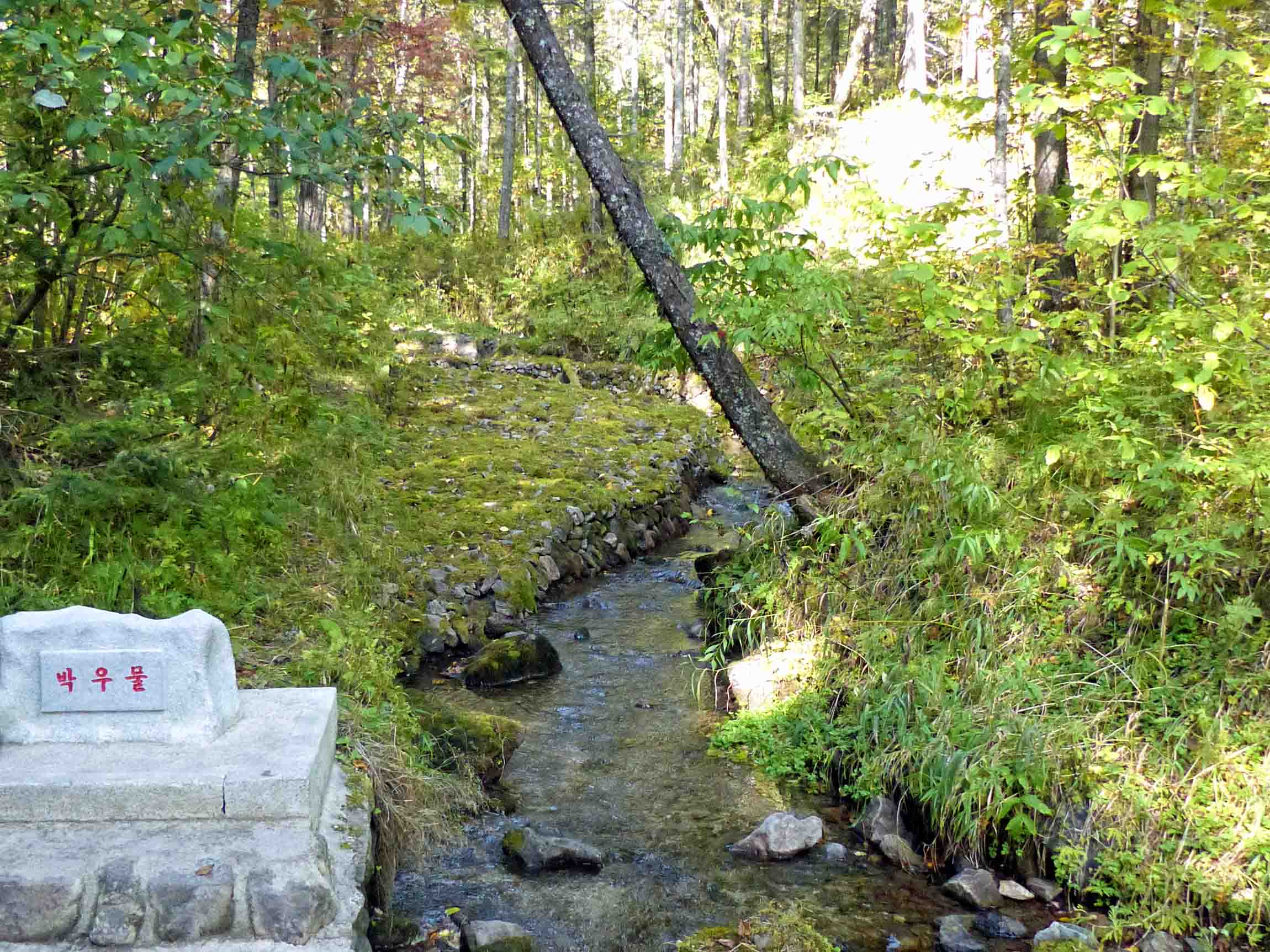 Tall trees and small stream with engraved stone