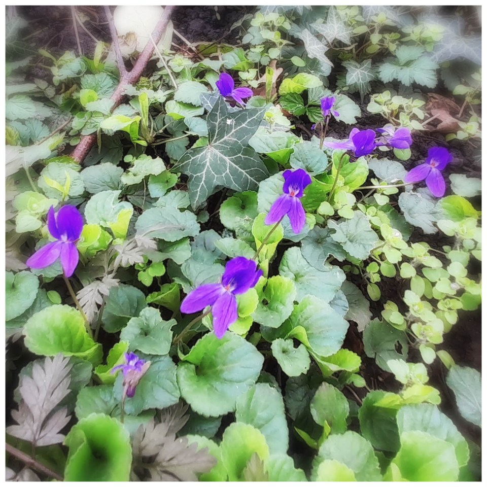 Tiny purple flowers among the leaves