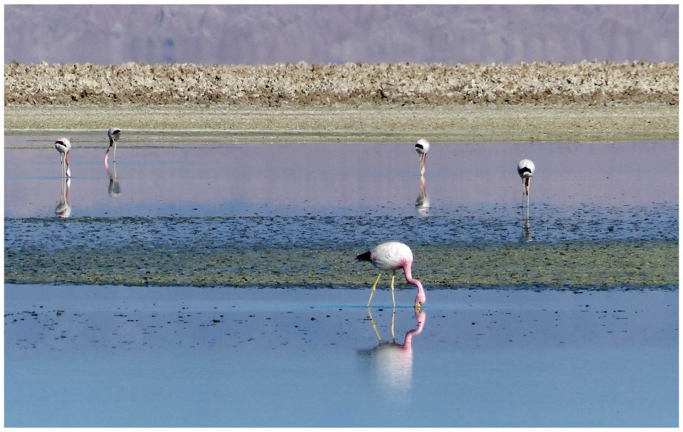 Landscape with flamingos, water and salt flats