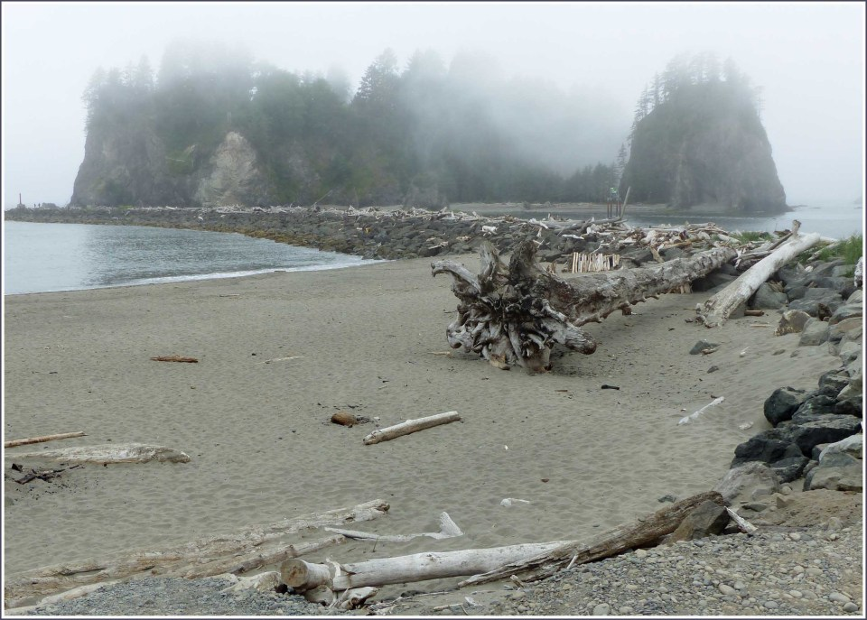 Misty sea stacks and beach with tree trunks