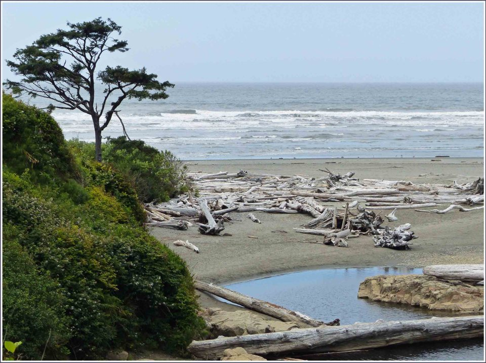 View of beach with timber and small stream