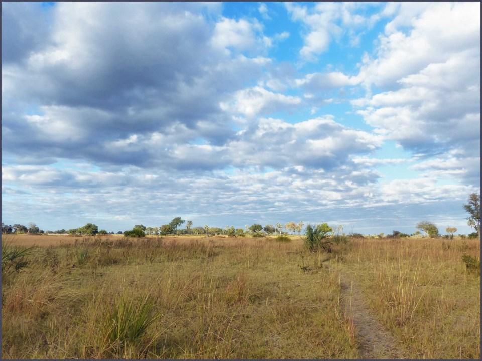 Savannah landscape under blue sky