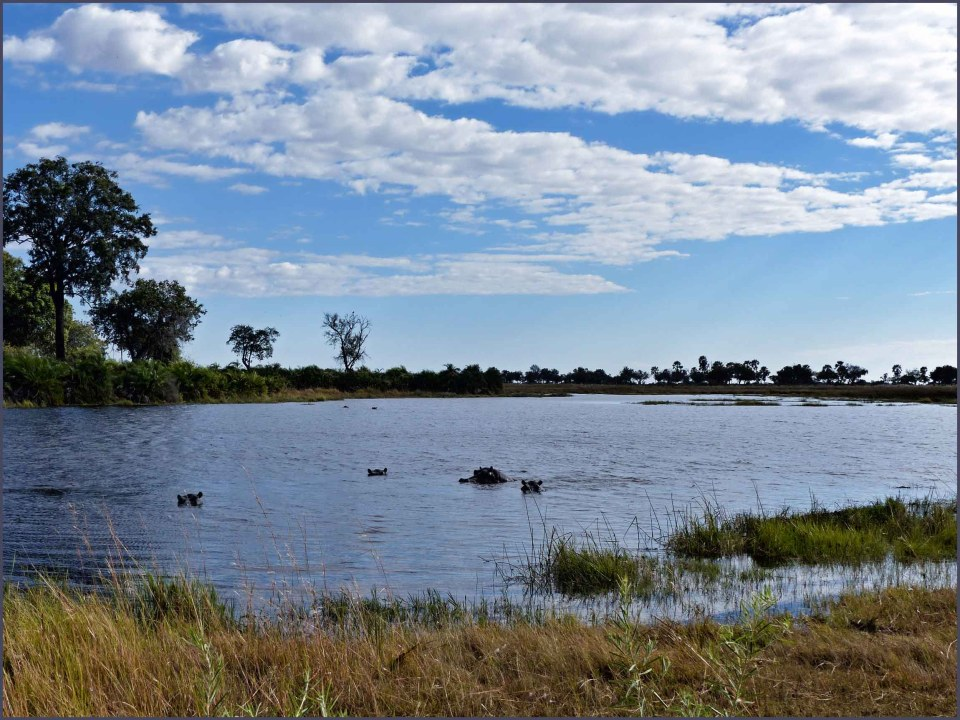 Large pool with hippos