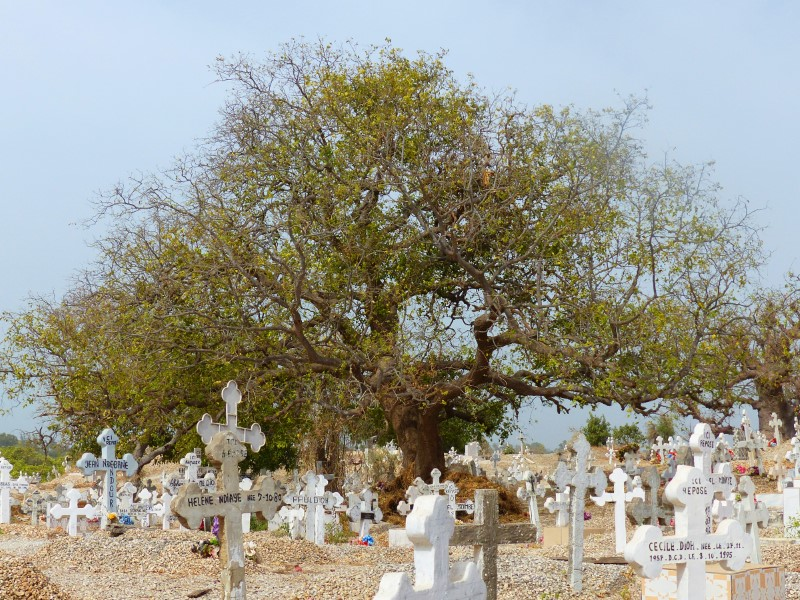 Large tree and white crosses