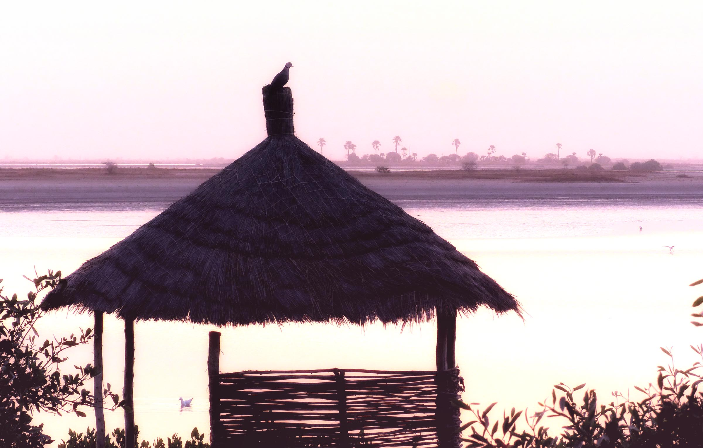 Bird on a thatch roof at sunrise