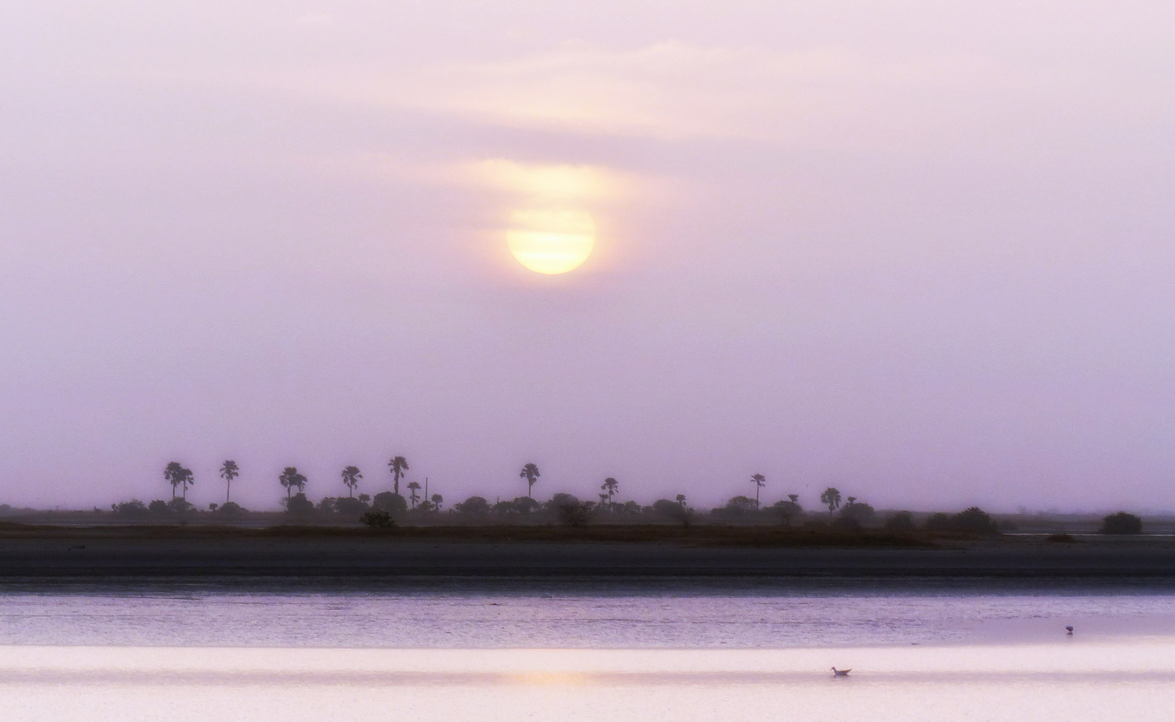 View of water and distant palm trees in pink light