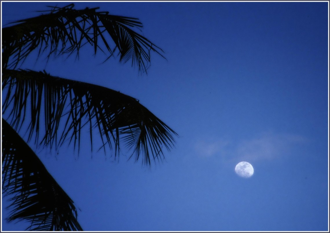 Palm tree against deep blue sky with moon