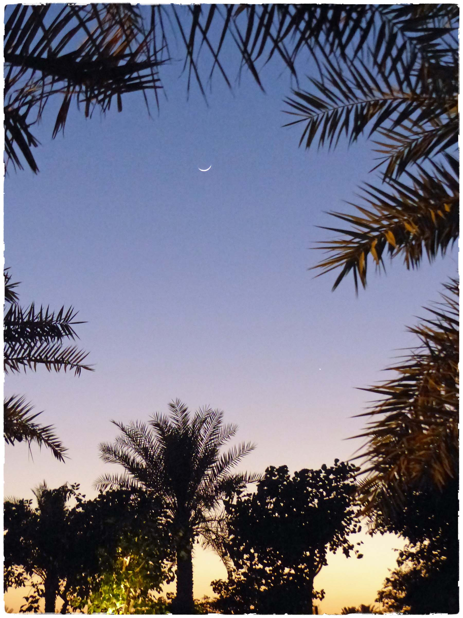 Sunset with palm trees and fine crescent moon