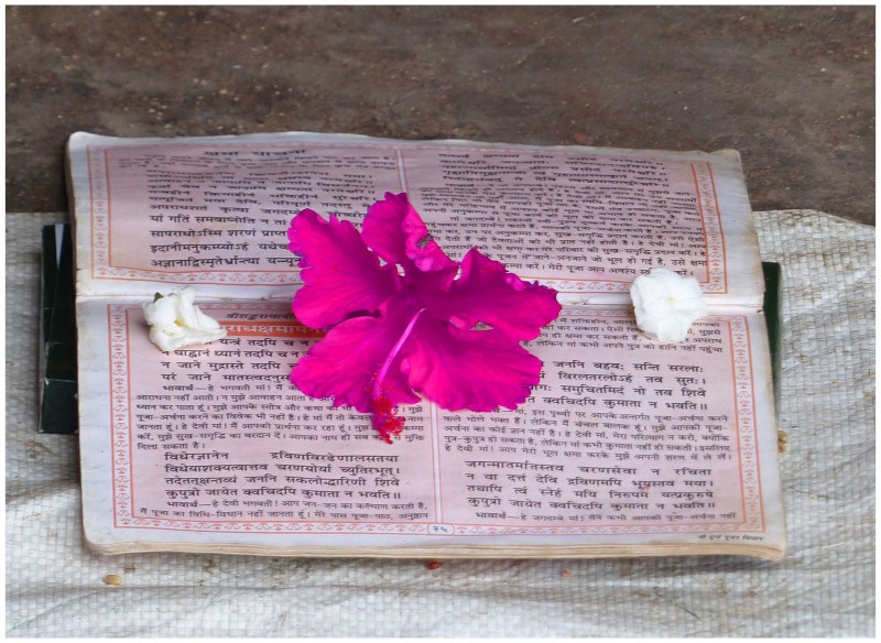 Pink hibiscus flower on an open book