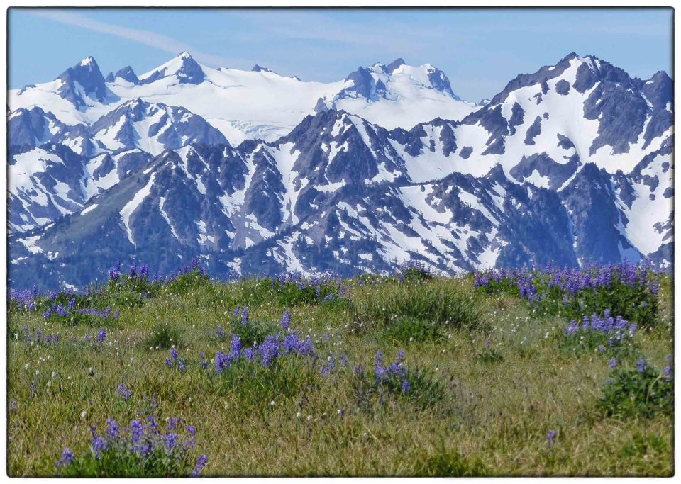 Meadow with blue flowers and mountain ridge beyond