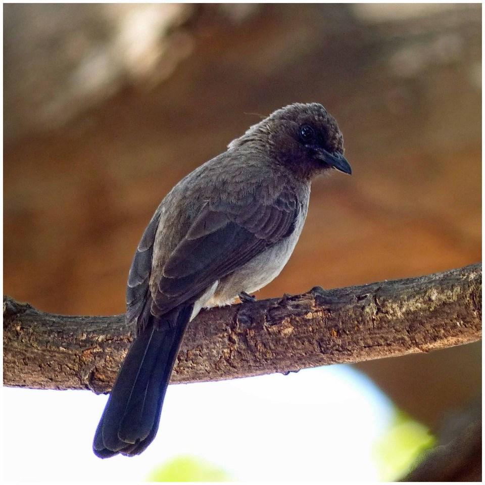Brown bird in a dead tree