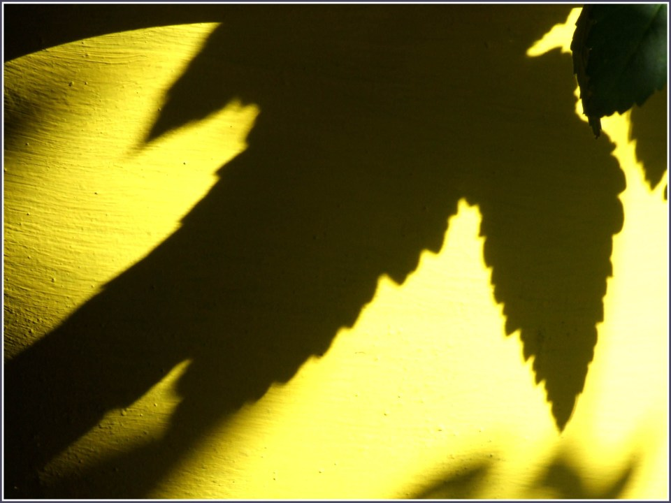 Shadow of leaves on yellow pot