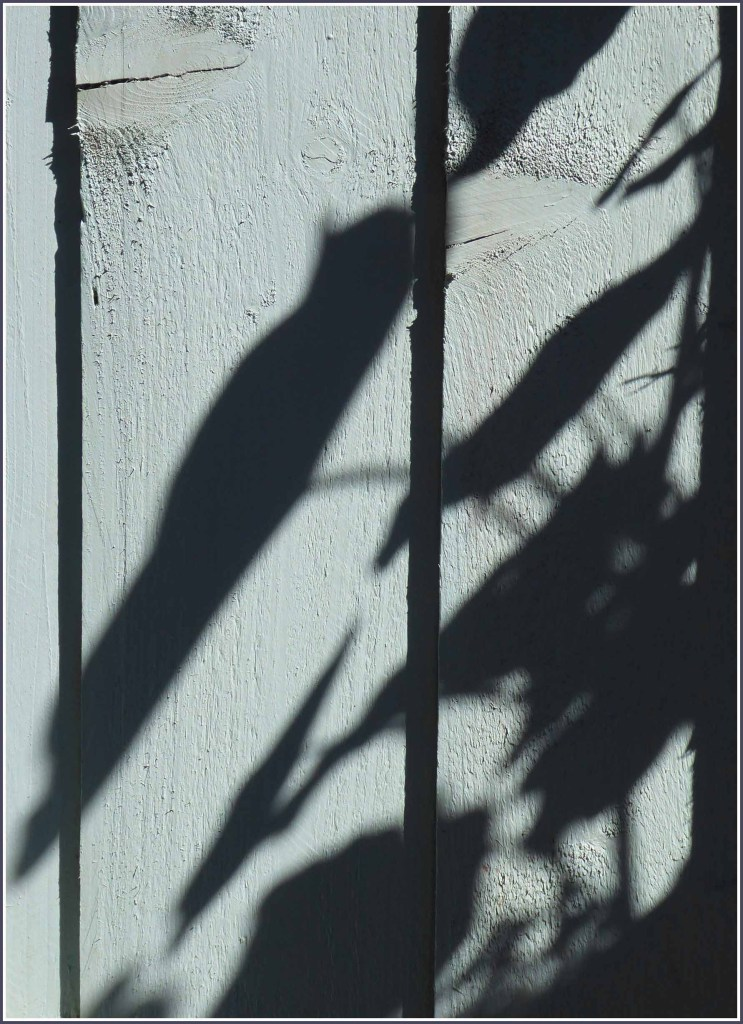 Leaf shadows on pale green wood planks