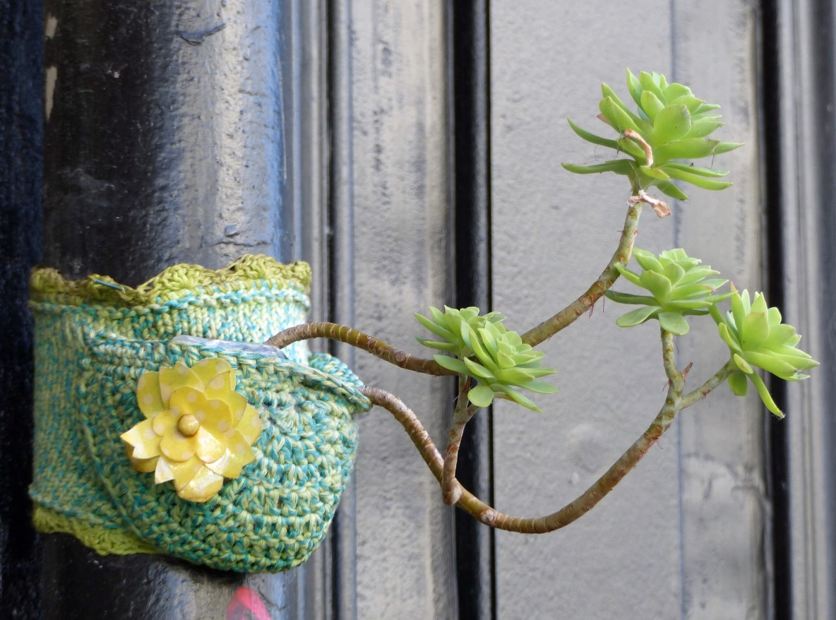 Succulent growing in knitted pot