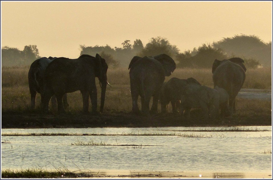 Group of elephants in yellow evening light