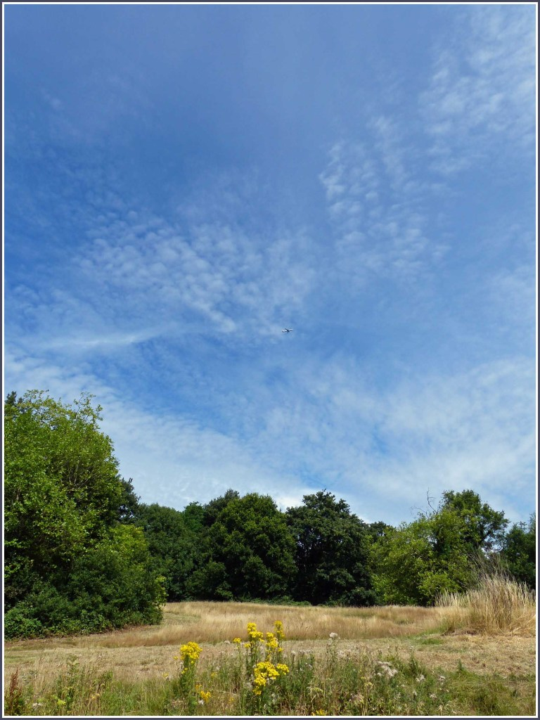 Dry grass, green trees and blue sky