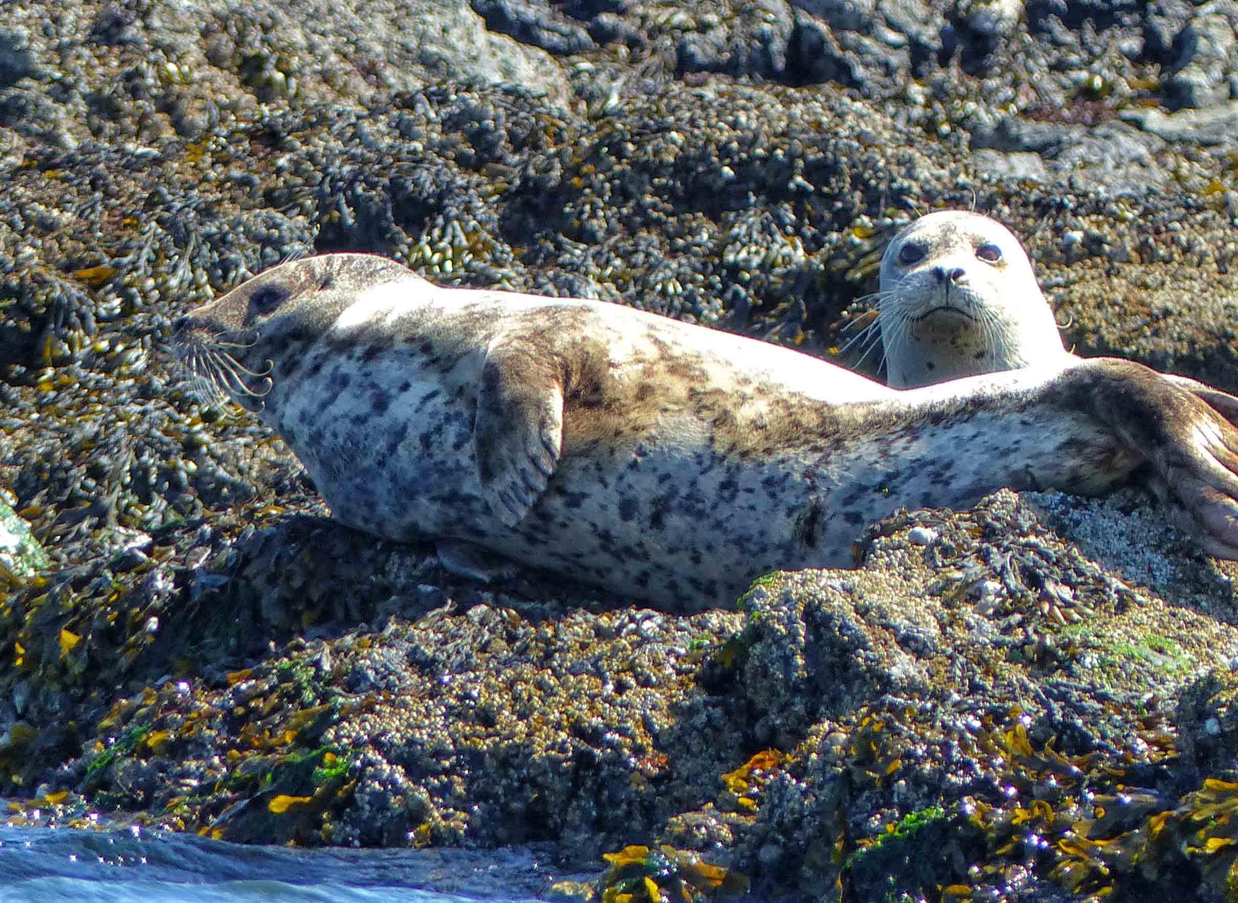 Two seals on rocks