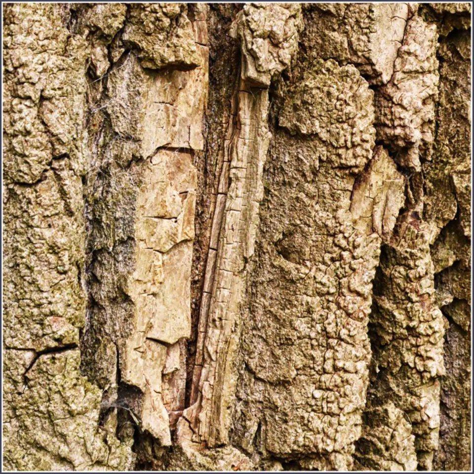 Ridged tree bark